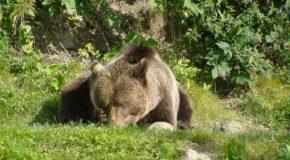 # 279: Watching the slovenian bears