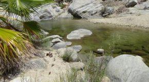 #463 : Explorer les oasis de la Sierra de la Laguna