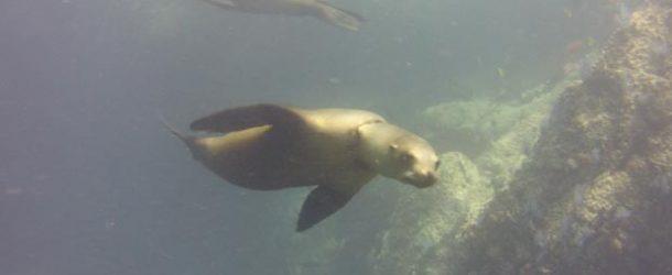 #478 : Diving in the Cortez Sea in Mexico