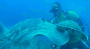 # 44: Diving with Stingrays & Negra Rays
