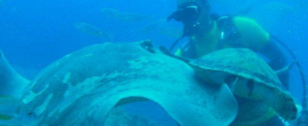 # 44: Diving with Stingrays & Negra Rays