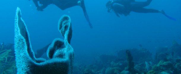 # 46: Diving on the Sec Paté (Gwada)