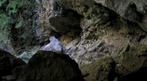 #32 : Crawling and twisting underground