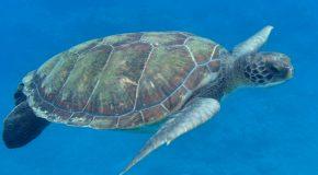 #70 : Vivre une histoire d'amour avec une tortue