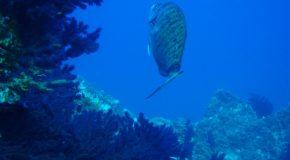 #47 : Plonger sur la Côte Vermeille dans la réserve de Bagnuls Cerbere