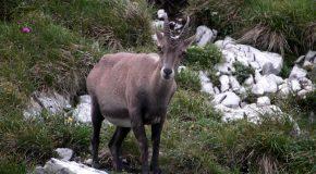 #67 : Se faire une virée dans le jardin alpin