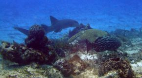 #142 : Diving in the footsteps of Cousteau in Cozumel