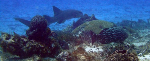 # 142: Diving in the footsteps of Cousteau Cozumel