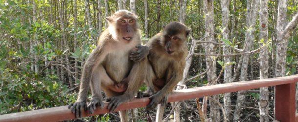 #124 : Trier des déchets avec un macaque crabier