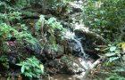 # 129: Exploring the Thai jungle