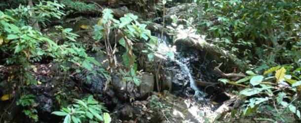 #129 : Exploring the Thai jungle