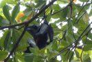 #123 : Voir des Bats géantes pour quelques Bahts