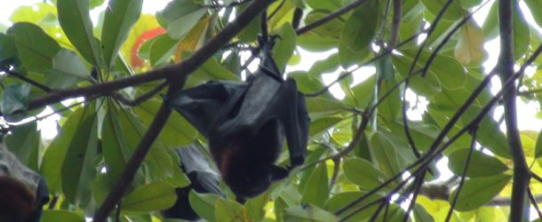 # 123: Seeing giant Bats for a few Baht