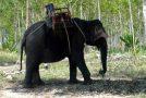 #127 : Monter sur un éléphant en Thaïlande