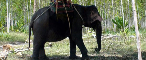# 127: Getting on an elephant in Thailand