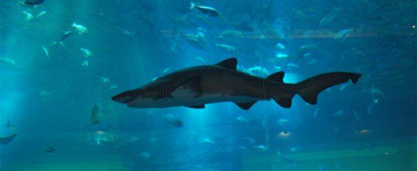 #152 : Plonger dans l'aquarium à requins de Dubaï