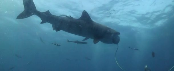 # 148: Diving close to Tiger Sharks without a cage!