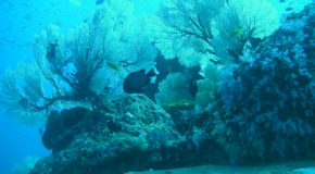 # 130: Diving in the Similan in Andaman Sea