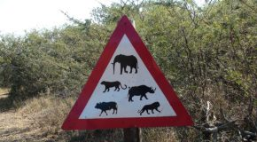 # 180: Watching the Big Five in South Africa