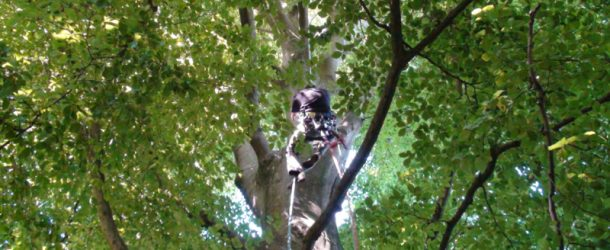 # 181: Climbing a 25 meters high tree