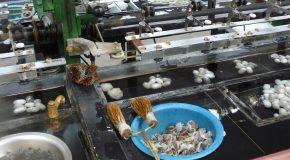 #206 : Apprendre à filer la soie en Chine