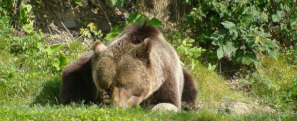 # 279: Watching the slovenian bears