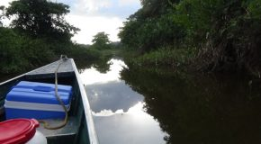 #336: Exploring the Kaw's swamp in Guyana