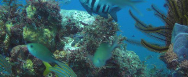 #338 : Plonger dans les eaux martiniquaises