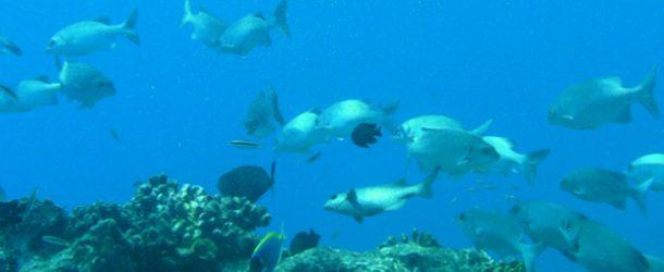 #365 : Plonger dans les atolls des Maldives