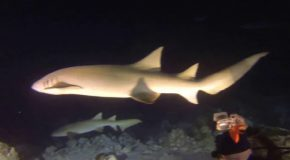 #358: Diving by night with nurse sharks