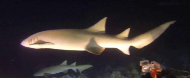 #358 : Plonger de nuit avec les requins nourrices