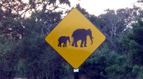 #382 : Observer la faune sauvage d'Uduwalawe à Yala