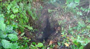 #403 : Explorer la forêt humide du volcan Mombacho