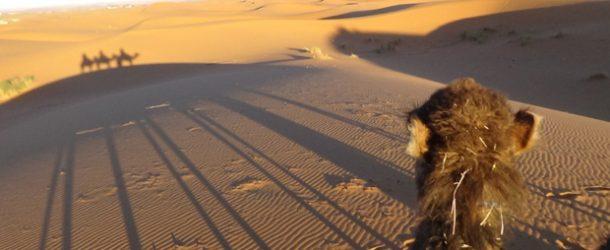 #445 : Voir un coucher de soleil sur la plus haute dune du Sahara