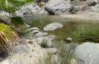 #463 : Exploring the oasis of Sierra de la Laguna in Mexico