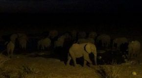 #547 : Observing the night-life of a water spot in Namibia