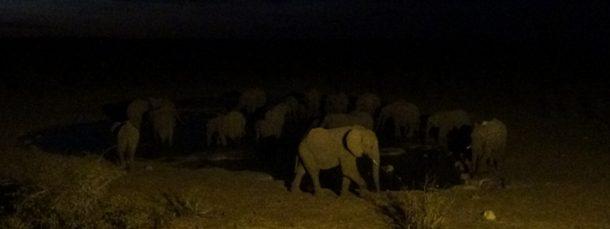 #547 : Observer la vie nocturne d'un point d'eau en Namibie