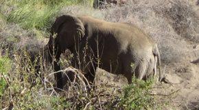 #541 – Meeting a desert elephant in Namibian Brandberg