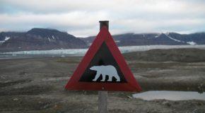 Les plus beaux panneaux d'animaux sauvages