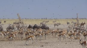 #535 : Doing a safari in the park of Etosha in Namibia
