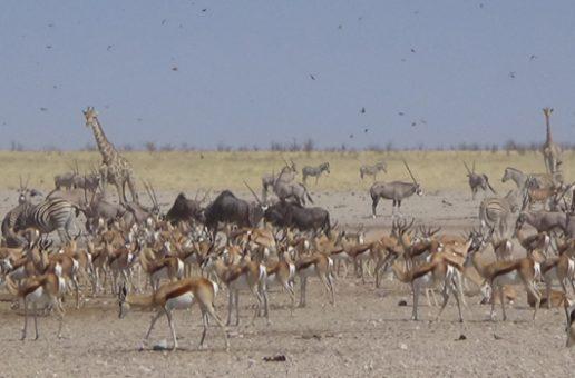 #535 : Observer l'incroyable faune de la Namibie