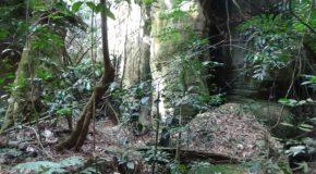 #300 : S'aventurer dans le Canyon d'Indiana Jones en Guinée