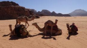 #574 : Exploring the Wadi Rum Desert in Jordan