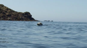 #600 : Swimming with the Breton gray seals in Morlaix