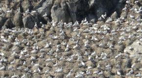 #601 : Se rendre dans l'archipel des Sept-Îles en Bretagne