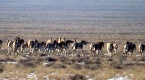 #604 : Observer la faune des steppes à Altyn Emel au Kazakhstan