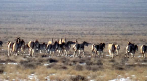 #604 : Exploring Altyn Emel Nature Park in Kazakhstan