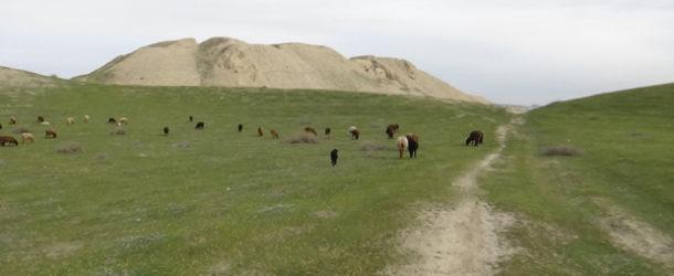 #628 : Explorer les vestiges d'Afrosiab, la Samarcande Antique