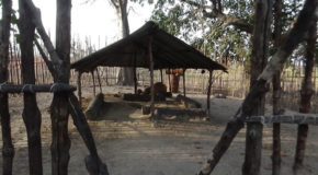 #678 : Visiting the Diola impluvium house in the village of Seleki in Casamance