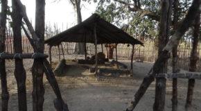 #678 : Visiter la case à impluvium Diola du village de Seleki en Casamance